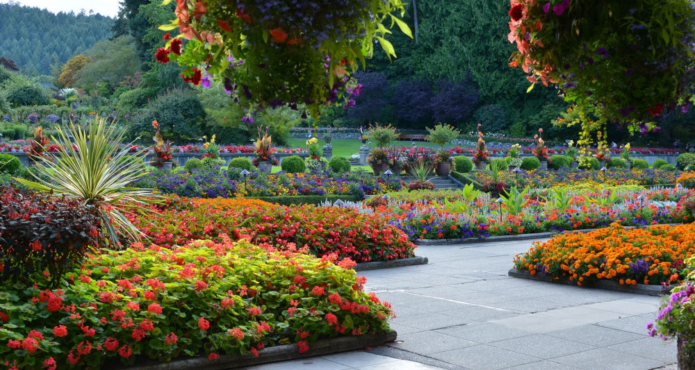 The butchart gardens victoria canada italian garden - Italian restaurant winter garden ...
