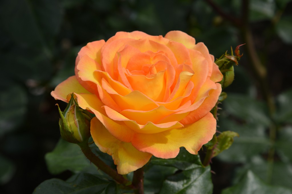 What S In Bloom Now Garden Updates July 1 6 The