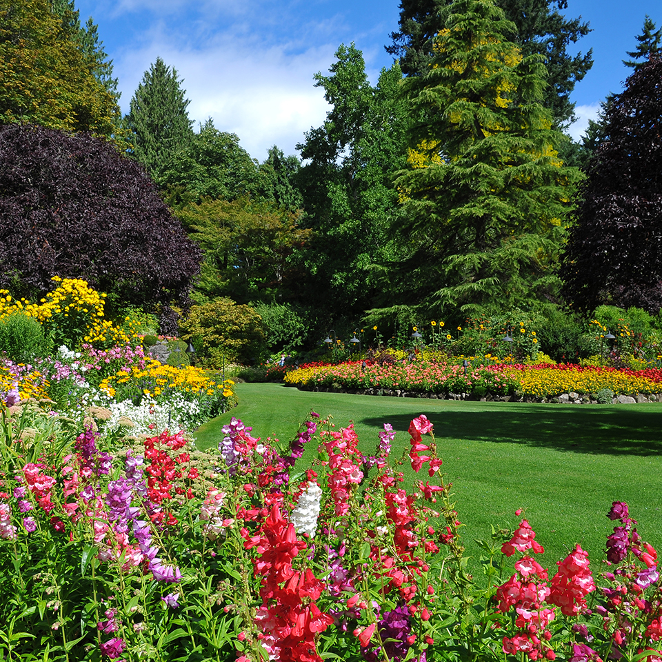 Garden: The Butchart Gardens