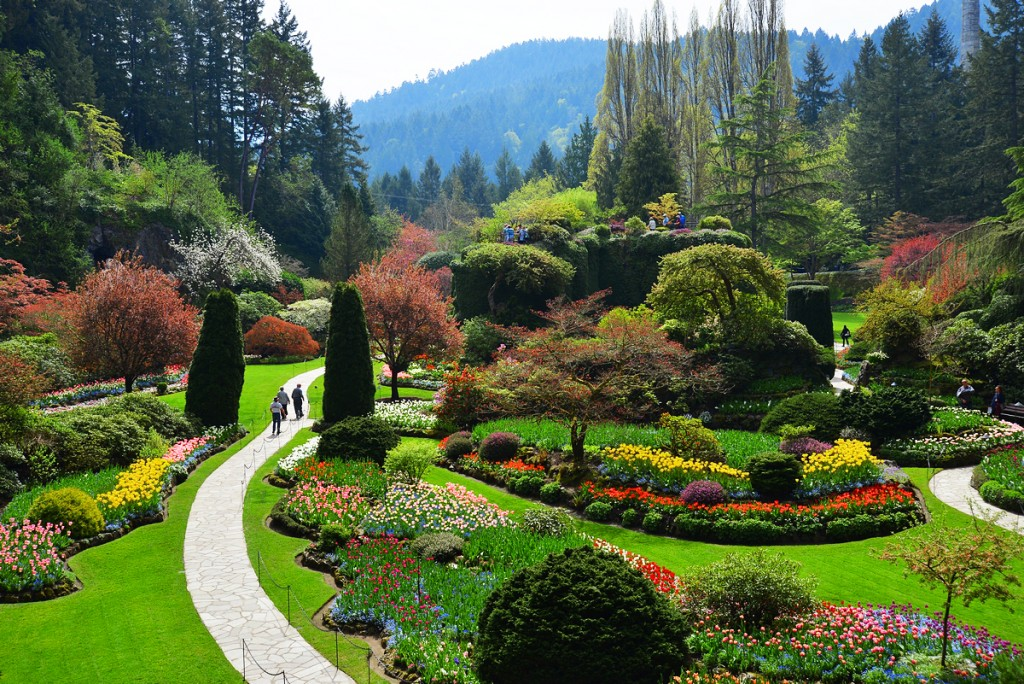 Spring garden insights the butchart gardens - Best time to visit butchart gardens ...